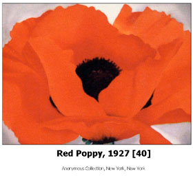 Image of Red Poppy, 1927, age 40